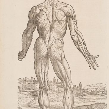 Rear view of nude male figure before landscape
